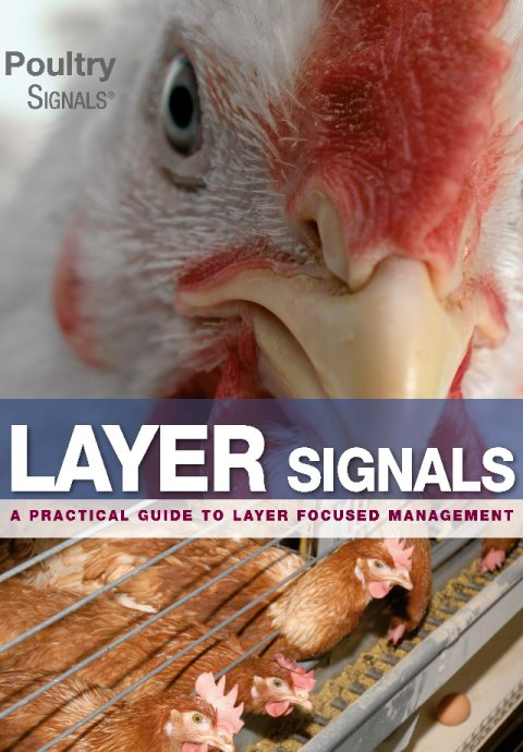 Layer Signals