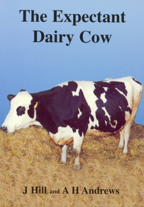 The Expectant Dairy Cow