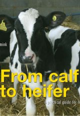 From Calf to Heifer by Berrie Klein-Swormink and Jan Hulsen