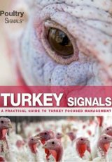 Turkey Signals by Edward Mailyan