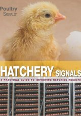 Hatchery Signals - COMING SOON by TBC
